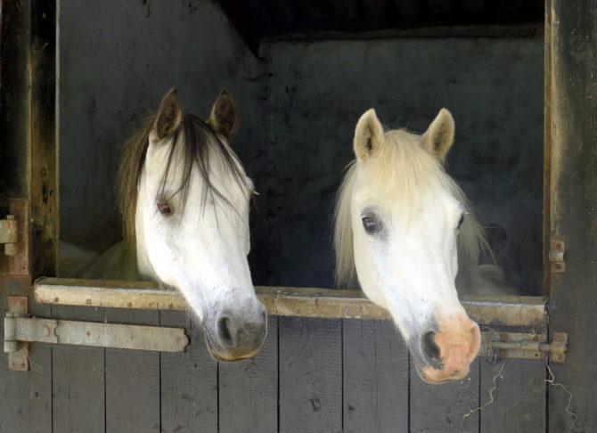 Horses-Cwt-Gwyrdd-Glamping-089