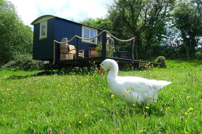 Shepherds Hut Ryan the Goose